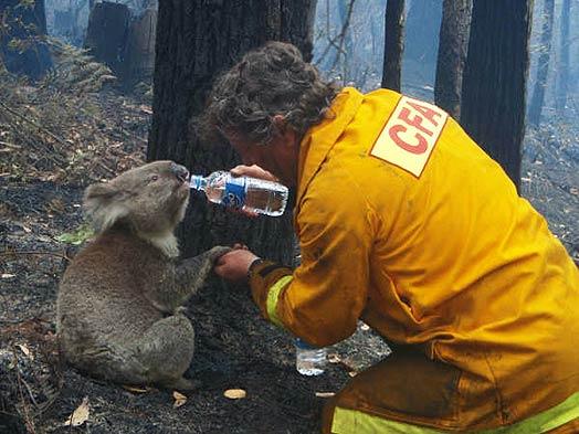 Click image for larger version  Name:GC Bulletin 10-02-09 Vic Bushfires.jpg Views:127 Size:45.8 KB ID:154771