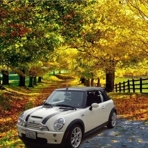 Cream Mini with Fall Colors.jpg